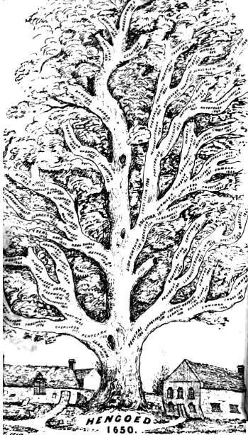 """Le """"viel arbre de vie' de Hengoed"""